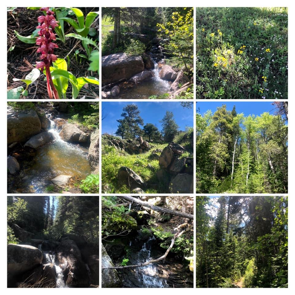 bridle trail 1